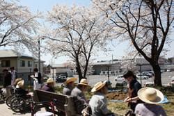 敷地内の桜を眺める様子