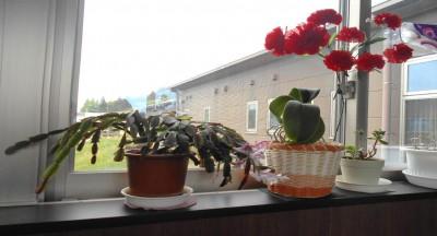 施設内の鉢植えその2